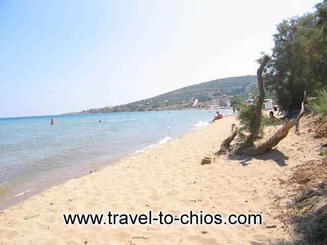 KARFAS BEACH - View of the sandy beach of Karfas in Chios island Greece, where the pine trees reach the sea